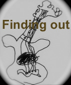 finding-out