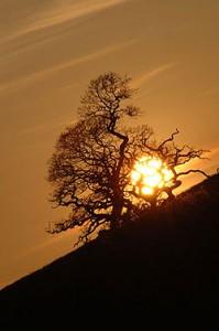 sunset-hill-mylor